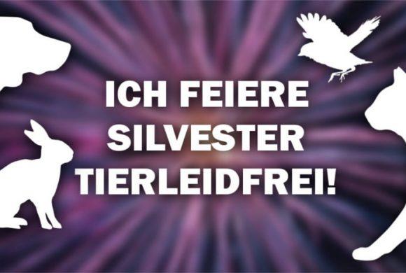 ICH FEIERE SILVESTER TIERLEIDFREI – Profil- und Titelbild!
