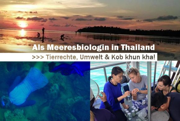 Als Meeresbiologin in Thailand #1