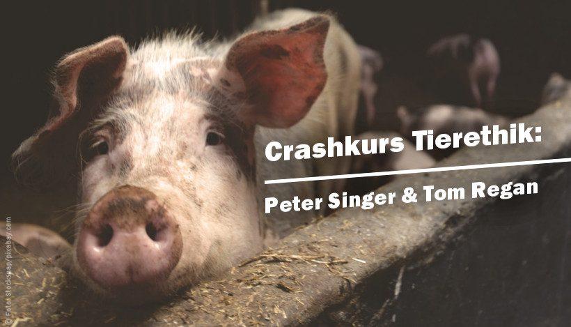 Crashkurs Tierethik: Tom Regan & Peter Singer