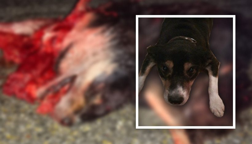 Besinnliche Weihnacht? – von einem Hund, der sein Leben lassen musste!