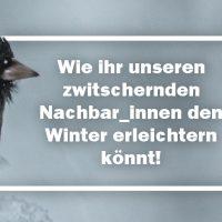 Wintervögel: So fühlen sie sich in eurem Garten wohl!