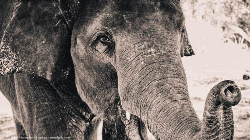 Tierschutz im Urlaub: Elefantenreiten in Asien