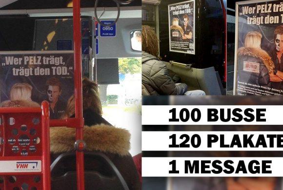 120 Anti-Pelz-Plakate in 100 Bussen fahren kreuz und quer durch Hamburg!