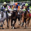 Pferderennsport! Das tödliche Spiel mit den Pferden