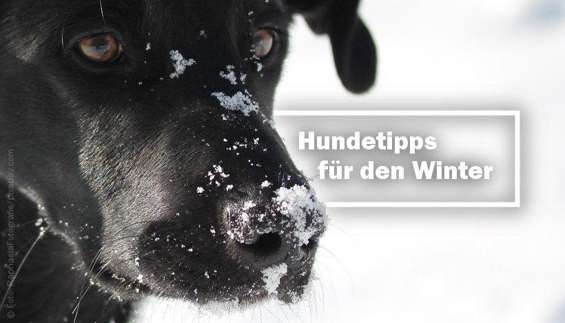 Bekommt dein Hund kalte Füße? Tipps für den Winter