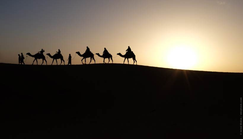 Tierschutz im Urlaub: Kamel-Trekking