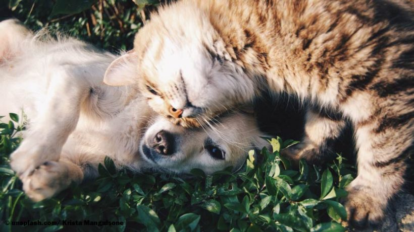 Giftige Blumen für Katz und Hund