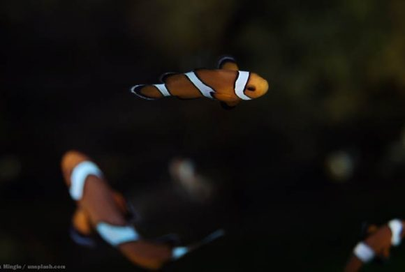 Tierschutz im Urlaub: Auf Nemos Spuren
