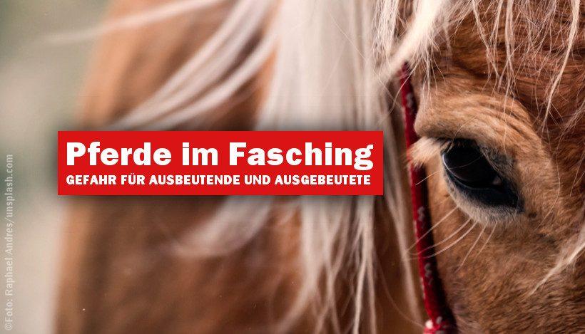 Pferde im Fasching – Gefahr für Ausgebeutete und Ausbeutende