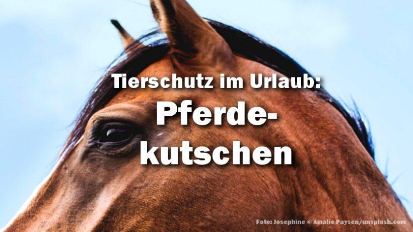 Tierschutz im Urlaub: Pferdekutschen