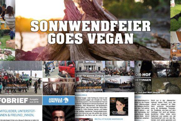 WHAT A WEEK: Vegane Sonnwendfeier & Infobrief 2018!
