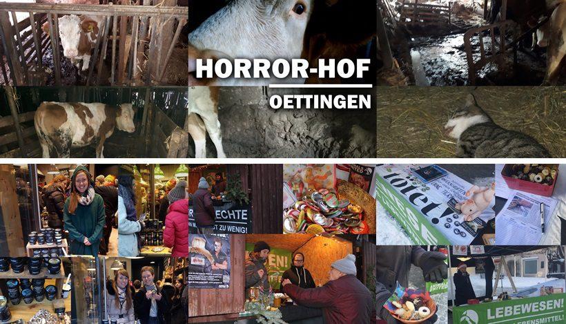 WHAT A WEEK: Aufdeckung des Horror-Hofes & weihnachtliche Aktionen