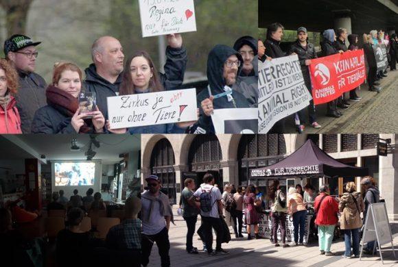 WHAT A WEEK: CircusOHNE, Aufklärung über Tauben & Filmabend