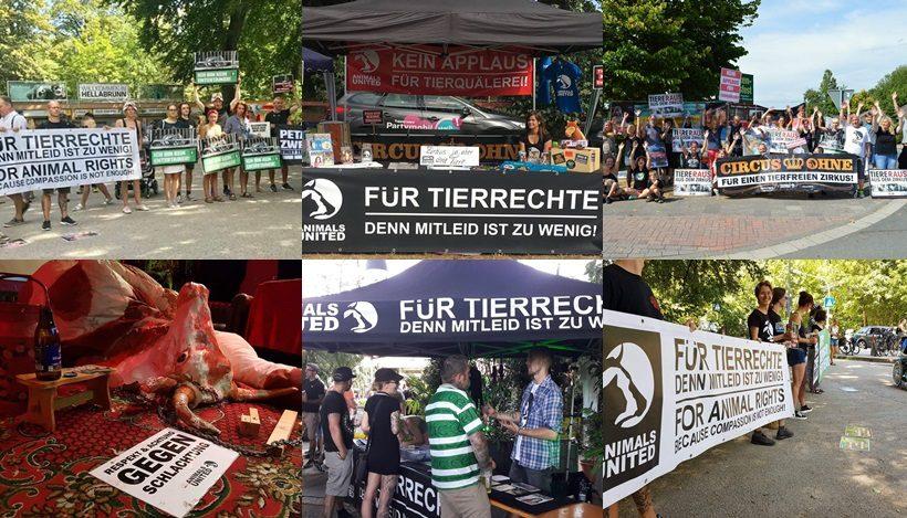 WHAT A WEEK: CircusOHNE, Tierrechte go Free&Easy Festival & ZooNoGo