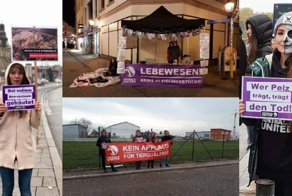 WHAT A WEEK: Aktiv für tierleidfreie Bekleidung in Zwickau & Hamburg!